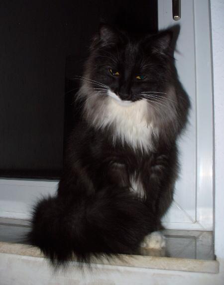 Unsere Katze Ronja
